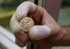 Zlatá mince Sovereign